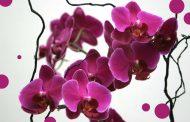 Międzynarodowa Wystawa Orchidei